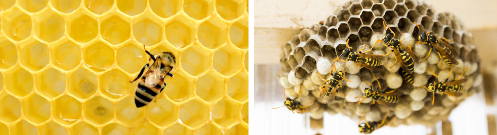 Nesting Habits of Bees and Wasps