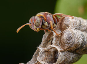 wasp close up